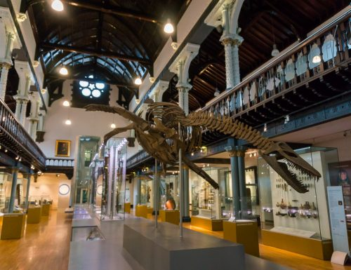 The Hunterian Museum – Highlights of the Main Gallery